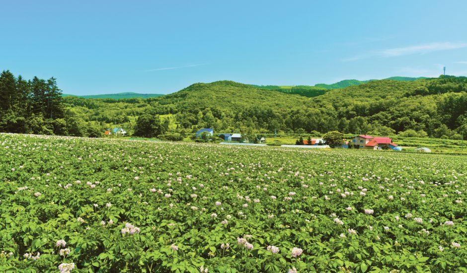 赤井川村 | 「日本で最も美しい村」連合